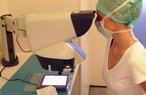 Haarwurzel unter dem Mikroskop bei FUE-Haartransplantation